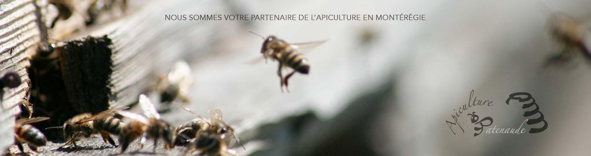 Apiculture Patenaude ! Votre partenaire de l'apiculture en Montérégie